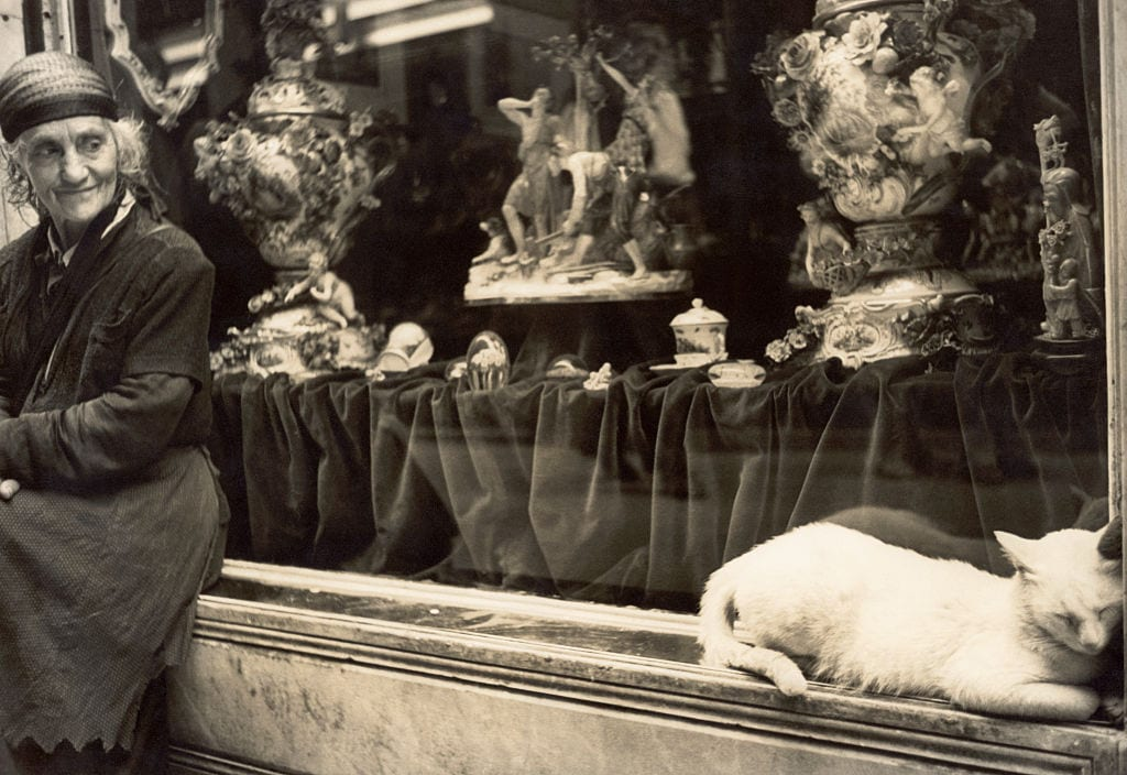 Cat Sleeping Outside an Antique Store