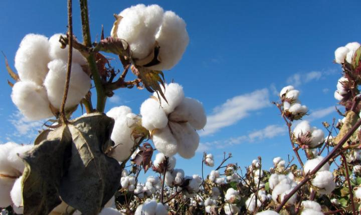 October 28, 1793: Eli Whitney applies for patent on his cotton gin invention
