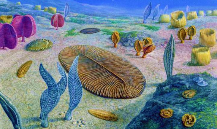 Our oldest animal ancestor looks like a pancake, and it's 558 million years old