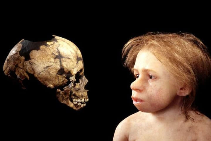 Did a Neanderthal child get eaten by a giant bird?