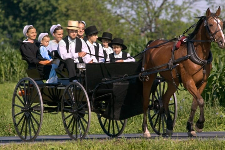 amish family horse buggy