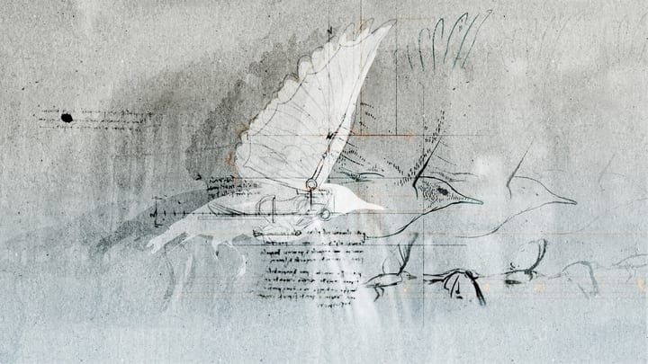 leonardo da vinci bird drawing