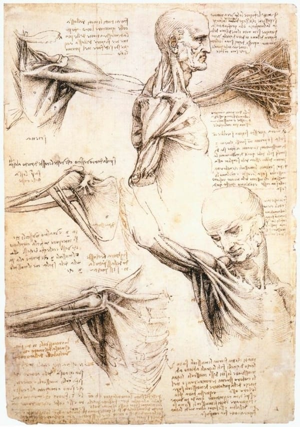 leonardo da vinci human shoulder drawing