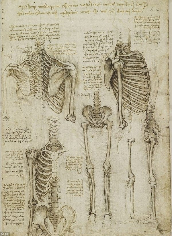 skeleton drawing leonardo da vinci