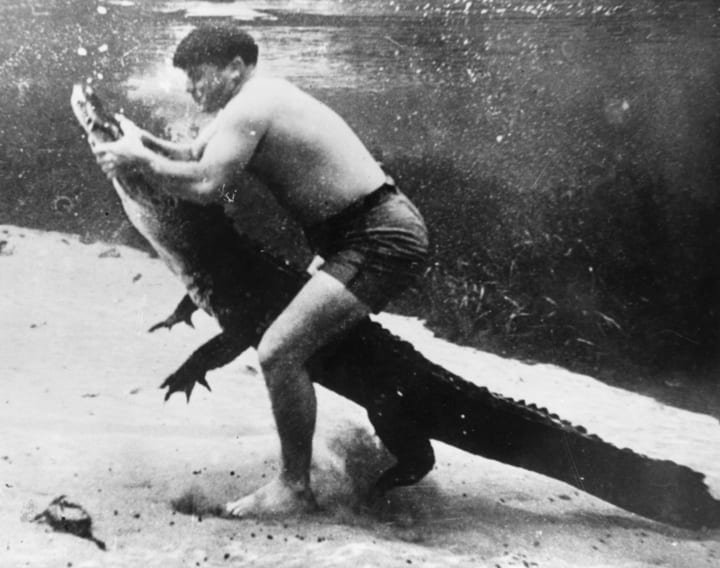 alligator wrestler florida performer