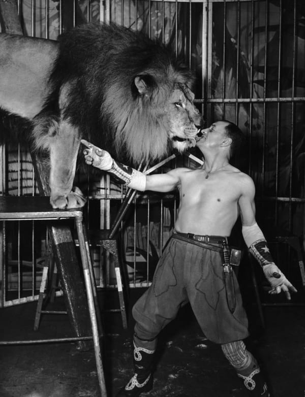lion tamer circus act feeding