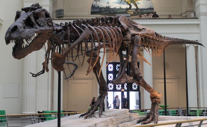 August 12, 1990: Largest T-rex skeleton ever discovered