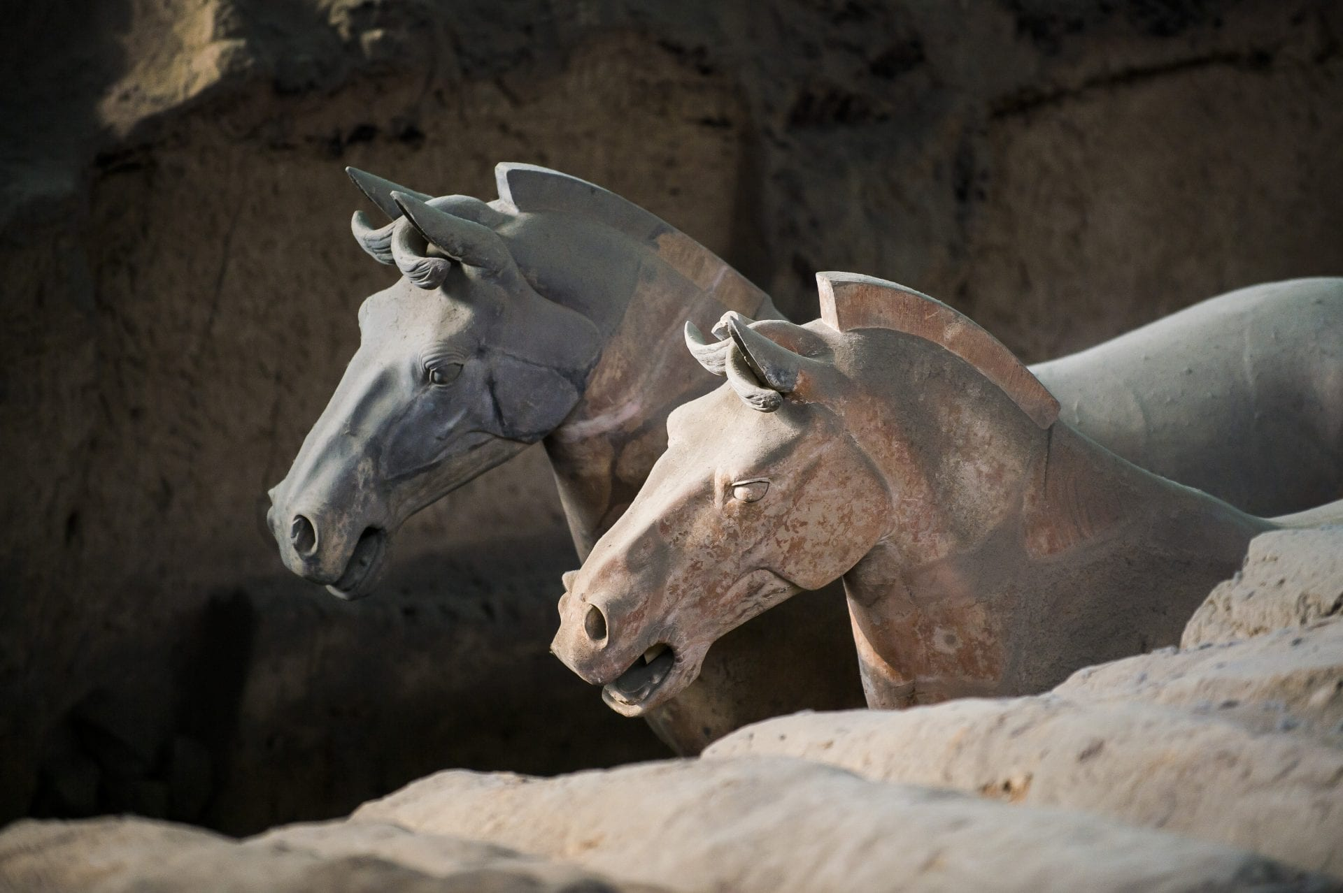 Terracotta-warrior-army-Emperor-Qin-Shi-Huang-first-emperor-of-China-horses-animals