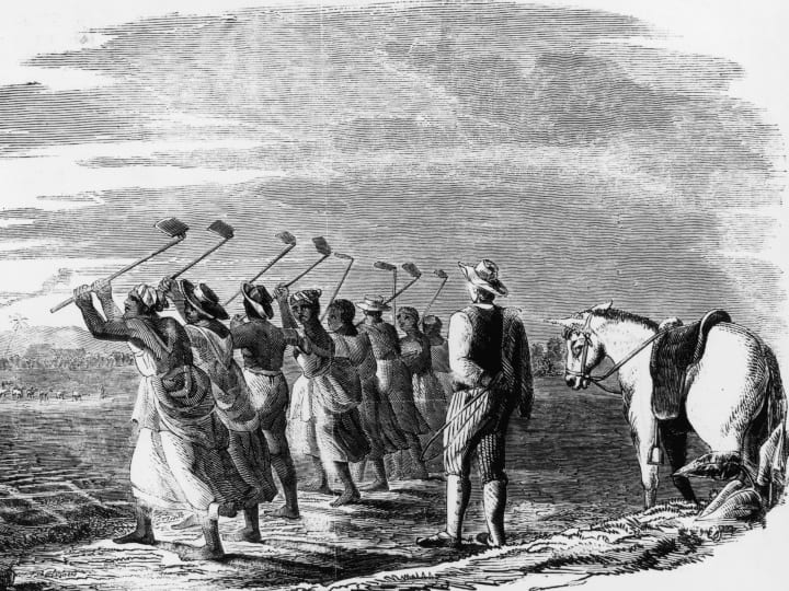 Native workers 'cane hoeling' on a sugar plantation in the West Indies, 1849, their progress is watched by a white supervisor with a whip. The process involves making deep holes in the ground in preparation for planting the sugar cane.