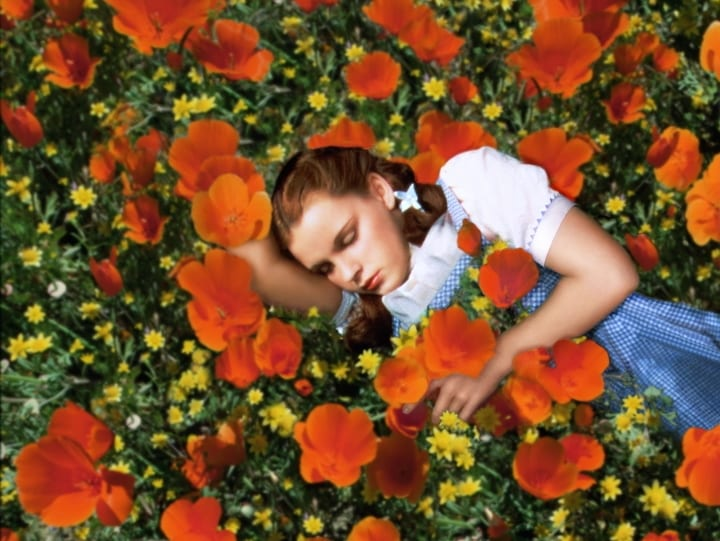 Judy Garland sleeping a meadow of flowers